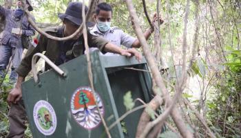 2,5 Tahun Berdiri, PPS Alobi Air Jangkang Telah Lepasliarkan 552 Satwa
